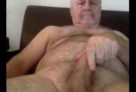Ursos dotado mostrando seu na punheta